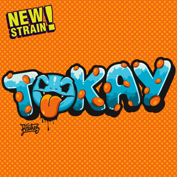 tokay